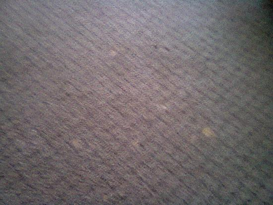 Ramada Edmonton Hotel & Conference Centre: Carpet at end of bed