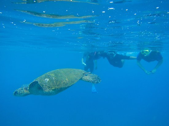 The Ocean Project On Maui: turtles