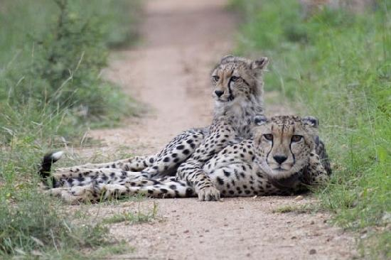 Kuname Lodge: Mother and cub.