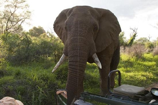 Kuname Lodge: Up close and personal with elephants.