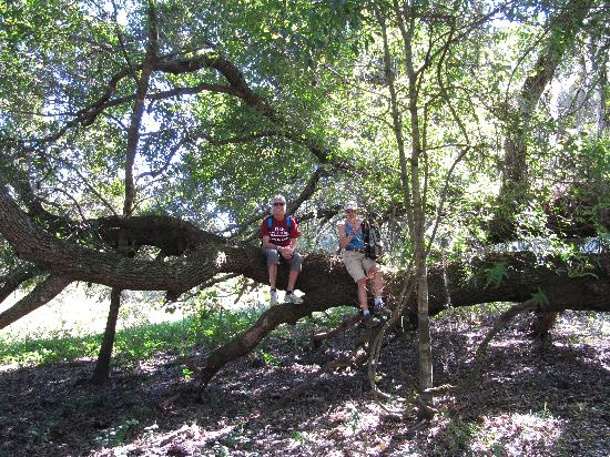 KICCO Wildlife Management Area : first you walk along dense stands of trees