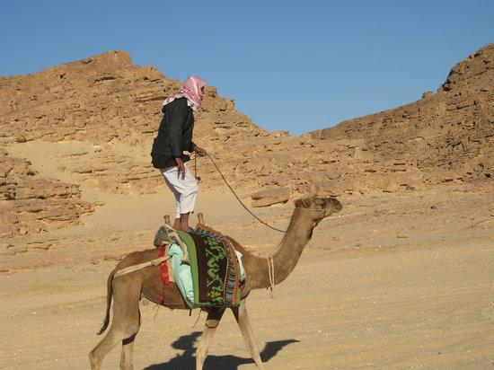 Sinai Safari - Day Tours: beduin sport