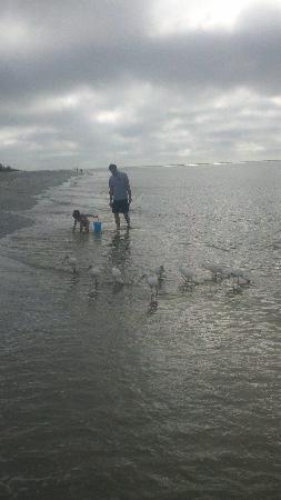 Mitchell's Sandcastles: beach