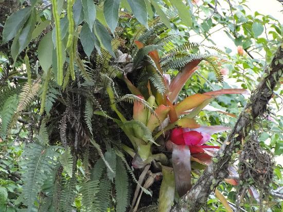 Santo Amaro da Imperatriz, SC: Vegetação... sempre surpreendendo.