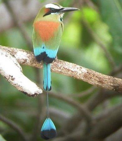 Cinquera Rain Forest Park: Ecoturismo