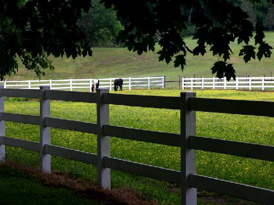 GreenRose of Raus: Horses next door