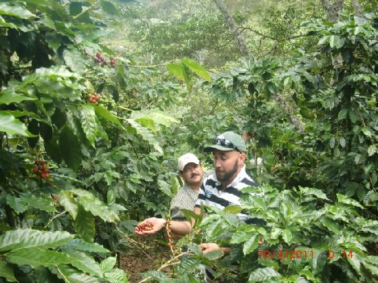 Hotel Don Moises: Owners coffee farm