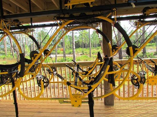 Cypress Canopy Tours Florida