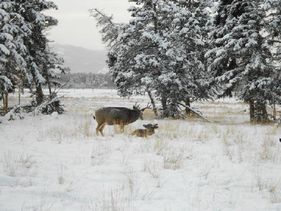 Whitehorse, Canada: Yukon Wildlife Preserve
