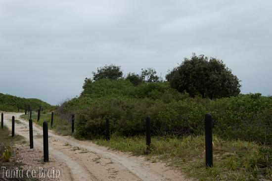 4WD track to the beach (can walk this too) - Picture of Ballina
