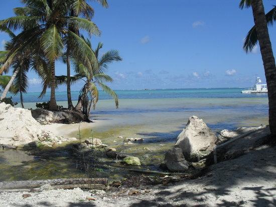 Dolphin Island : Praia para a plataforma