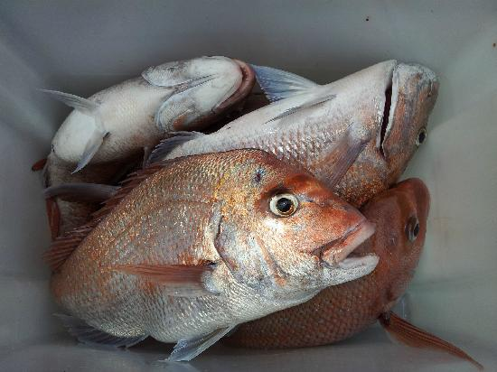 Hananui Lodge and Apartments: Fishing with John delivers results - See for yourself!