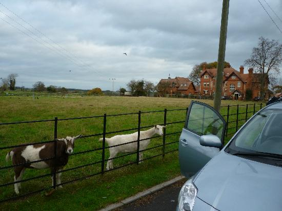 Goats, The Old Vicarage