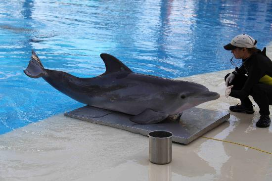 Dolphin Encounter Mirage Las Vegas Picture Of Siegfried Roy 39 S Secret Garden And Dolphin