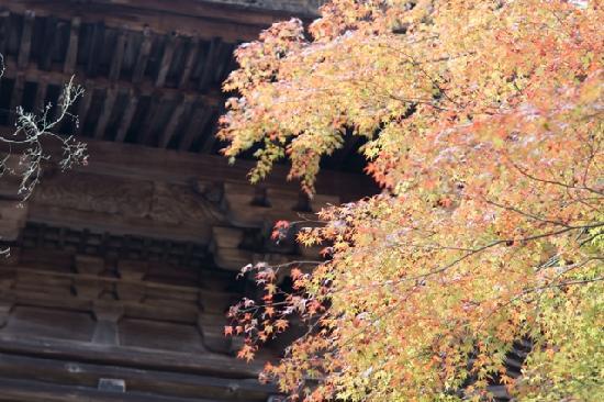 Jingoji Temple: 山門に添える紅葉