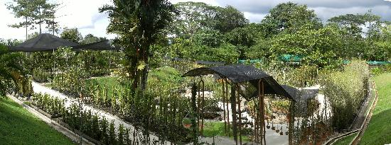 Sarawak Orchid Garden: Panorama of Orchid Garden