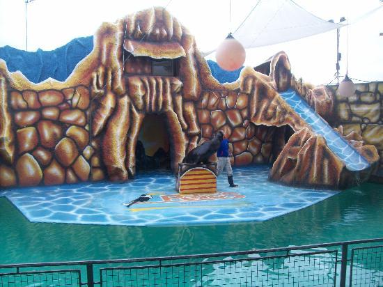 El show dw los lobos marinos picture of complejo peko 39 s - Carlos cordoba ...