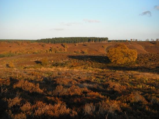 Cannock Chase at sunset