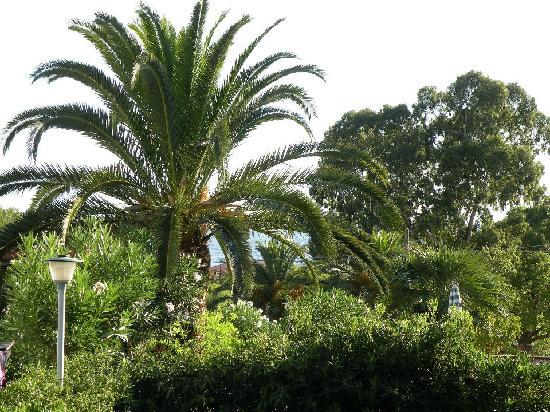 Residence Augusto : Vue sur mer ... derrière le palmier.