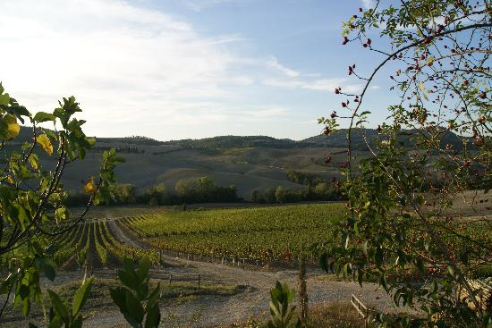 Agriturismo San Gallo: Peaceful view