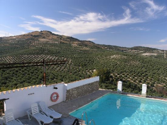 Hacienda Minerva: Pool at Minerva with olive trees in the background