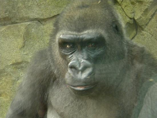 Franklin Park Zoo resident