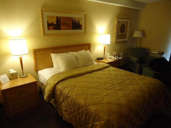 Comfort Inn: Room - 1 Queen