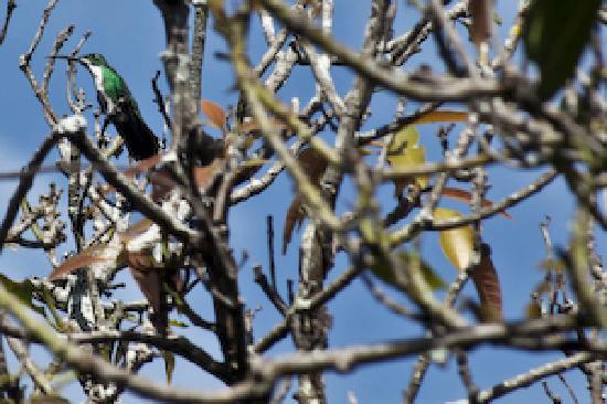 Vista Linda Montana: colibri dans le jardin