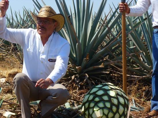 Enseñando la cultura del tequila