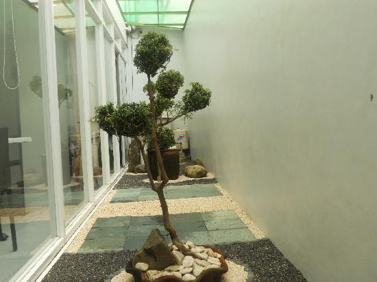 Cinfandel Suites : Garden
