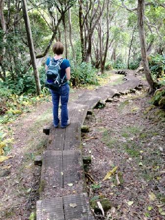 Inn Waimea: One of the many boardwalked sections of the Alakai Swamp Trail.