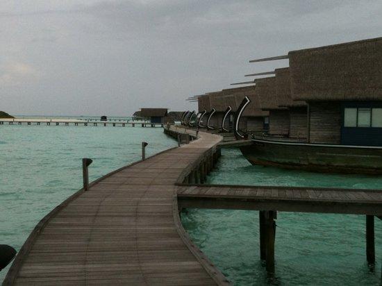 Cocoa Island by COMO: cocoa island 2011
