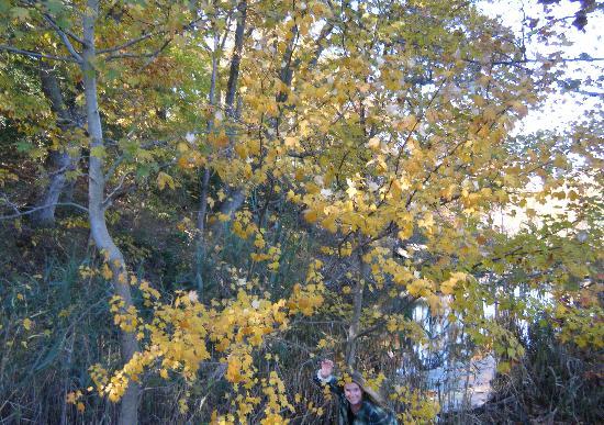 นอร์ทอีสต์, แมรี่แลนด์: Fall foliage