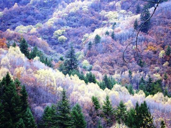 Jiuzhaigou Natural Reserve: Scenic forests