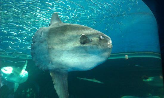 The Super Weird Fish Picture Of Yokohama Hakkeijima Sea Paradise