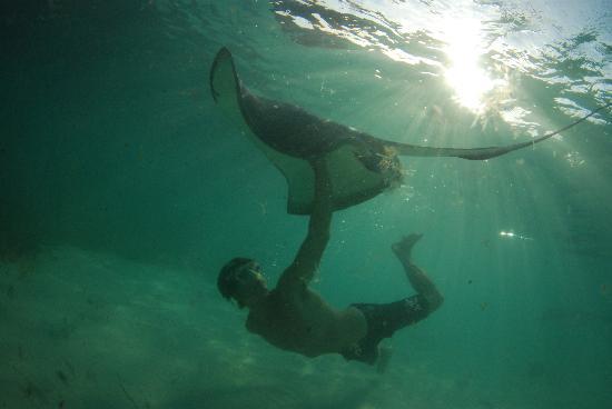 Oasis Divers: Stingrays are just one of the many amazing creatures you will encounter here