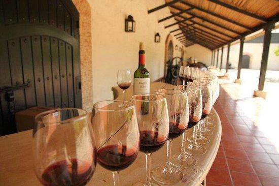 Concha y Toro Winery: degustacion