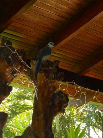 Hotel Amor de Mar: beautiful bird