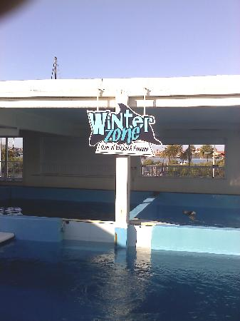Clearwater Marine Aquarium: CMA