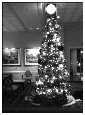 The Chase Park Plaza: The holiday tree in the lobby
