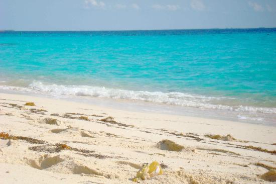 Salt Raker Inn: Beach