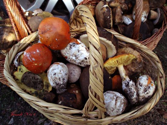 La Posada de Cortegana: Su riqueza Micologica