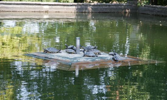 Lago delle tartarughe foto di parco giardino sigurt for Lago tartarughe