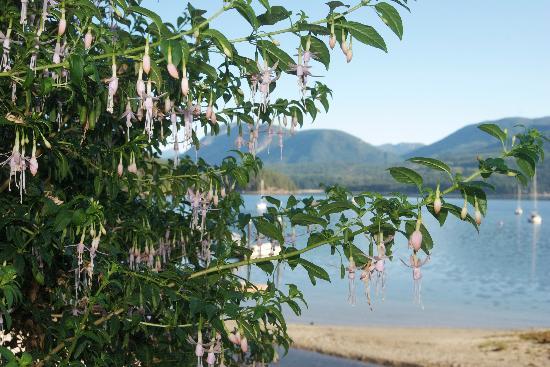 Takahashi Gardens Waterfront Retreat: Flowers in the gardens