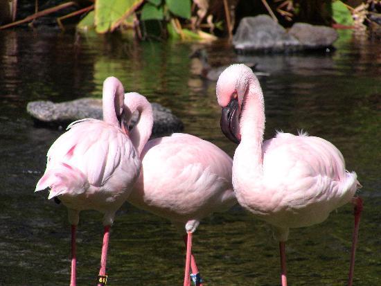 Hilton Hawaiian Village Waikiki Beach Resort : the beautiful birds!!!