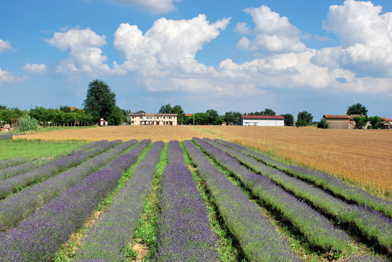 Agriturismo il Murello: lavanda e grano vista dal terrazzo e dal ristorante