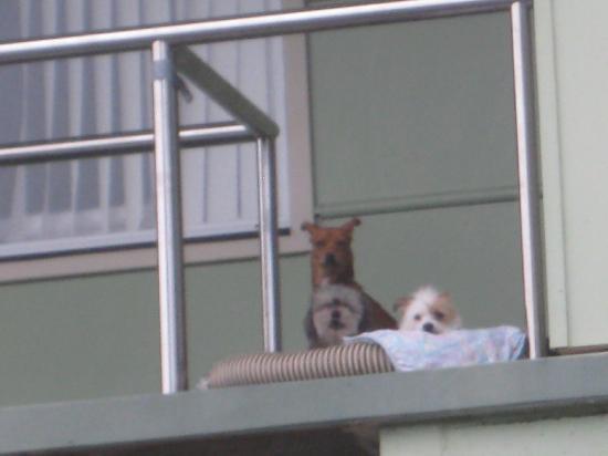 Koala Tree Motel: Die Hunde