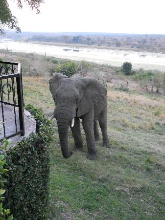 Buhala Lodge: This is how close the animals can get