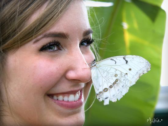Papillons du monde au jardin botanique du nb butterflies for Papillon jardin botanique 2015