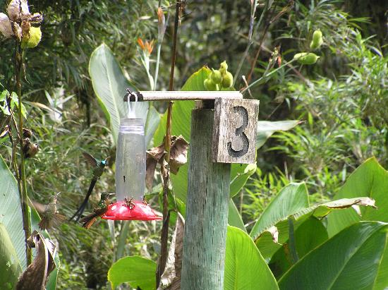 Cabanas San Isidro: Hummingbird feeders at San Isidro